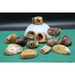 Ammonite Pebbles